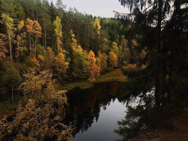 Autumn in Kjelsås Norway Plant Tree Water Tranquility Beauty In Nature Growth Nature Lake Reflection Tranquil Scene Scenics - Nature Forest Outdoors Coniferous Tree Green Color Idyllic Day