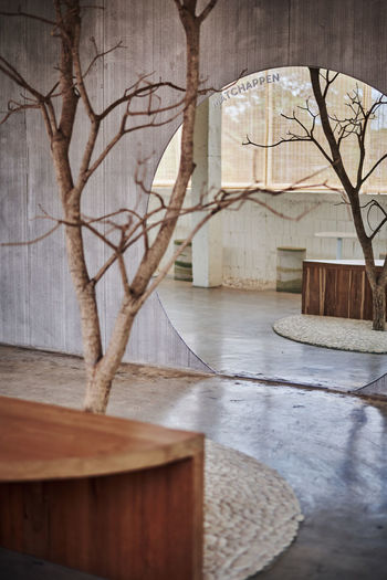 Bare tree in building