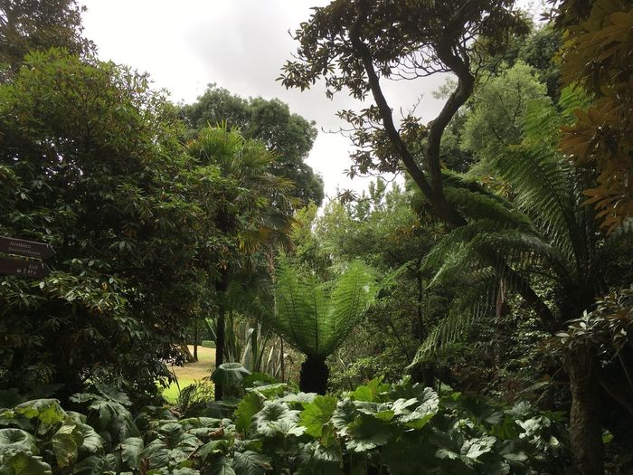 Lost Gardens Of Heligan Tree Plant Growth Green Color Beauty In Nature Nature Low Angle View Lush Foliage Tranquility Scenics - Nature
