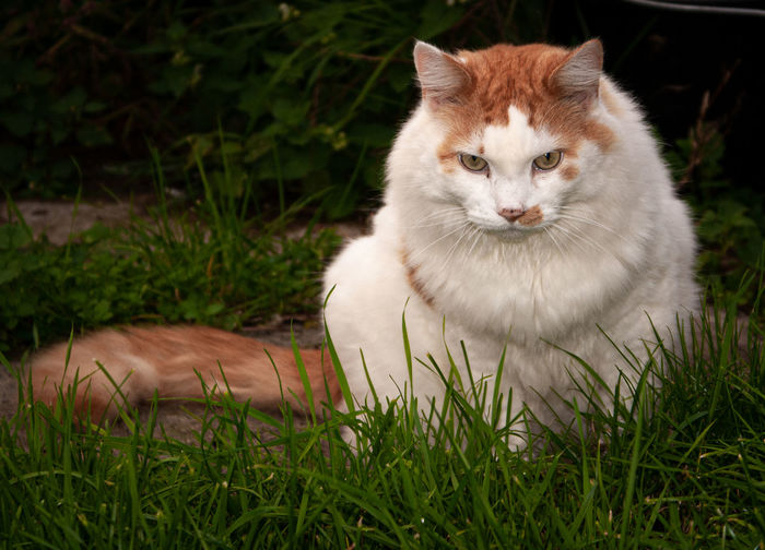 Cat sitting on grass