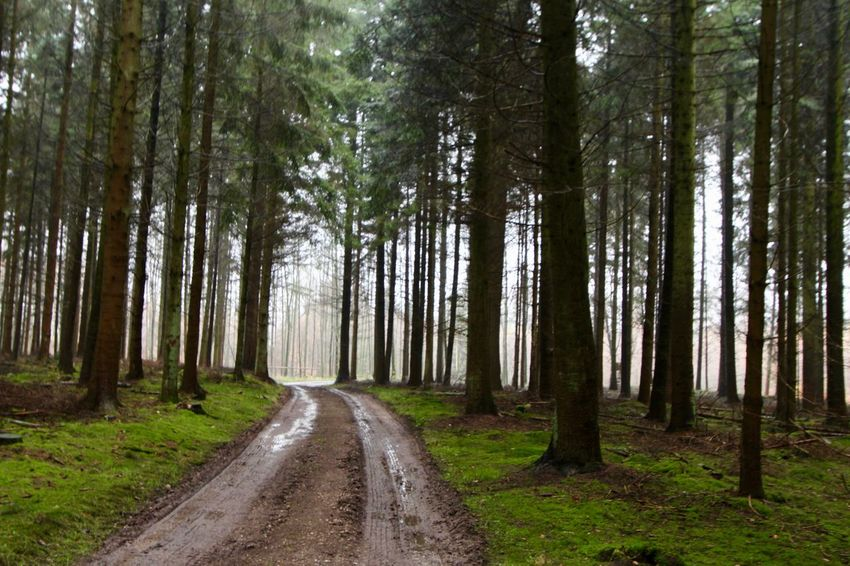 A December Sunday in the woods ... Beauty In Nature Forest Landscape Nature No People Outdoors Road Scenics Tree WoodLand