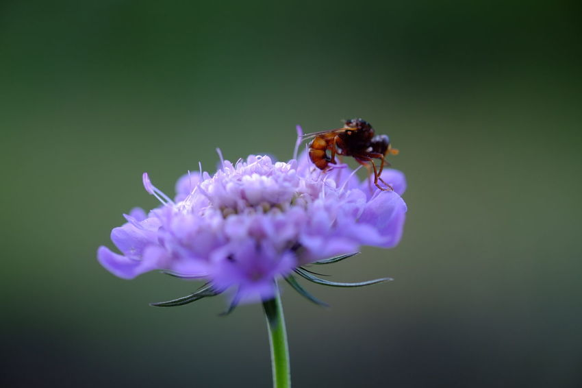 EyeEm Selects Flower Head Flower Bee Insect Uncultivated Purple Perching Petal Close-up Animal Themes
