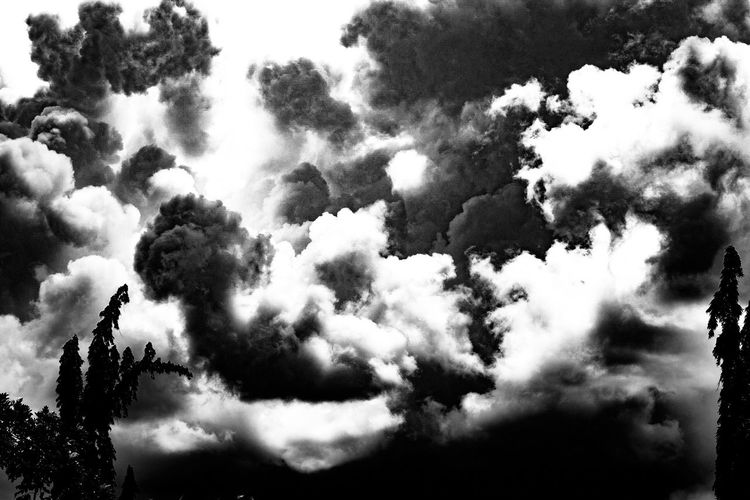 Angry clouds Low Angle View Sky Tranquility Tree Tranquil Scene Cloud - Sky Scenics Nature Cloud Day Outdoors Growth Cloudscape Majestic Tourism Cloudy Non-urban Scene Tall - High Beauty In Nature No People Eyeem Philippines