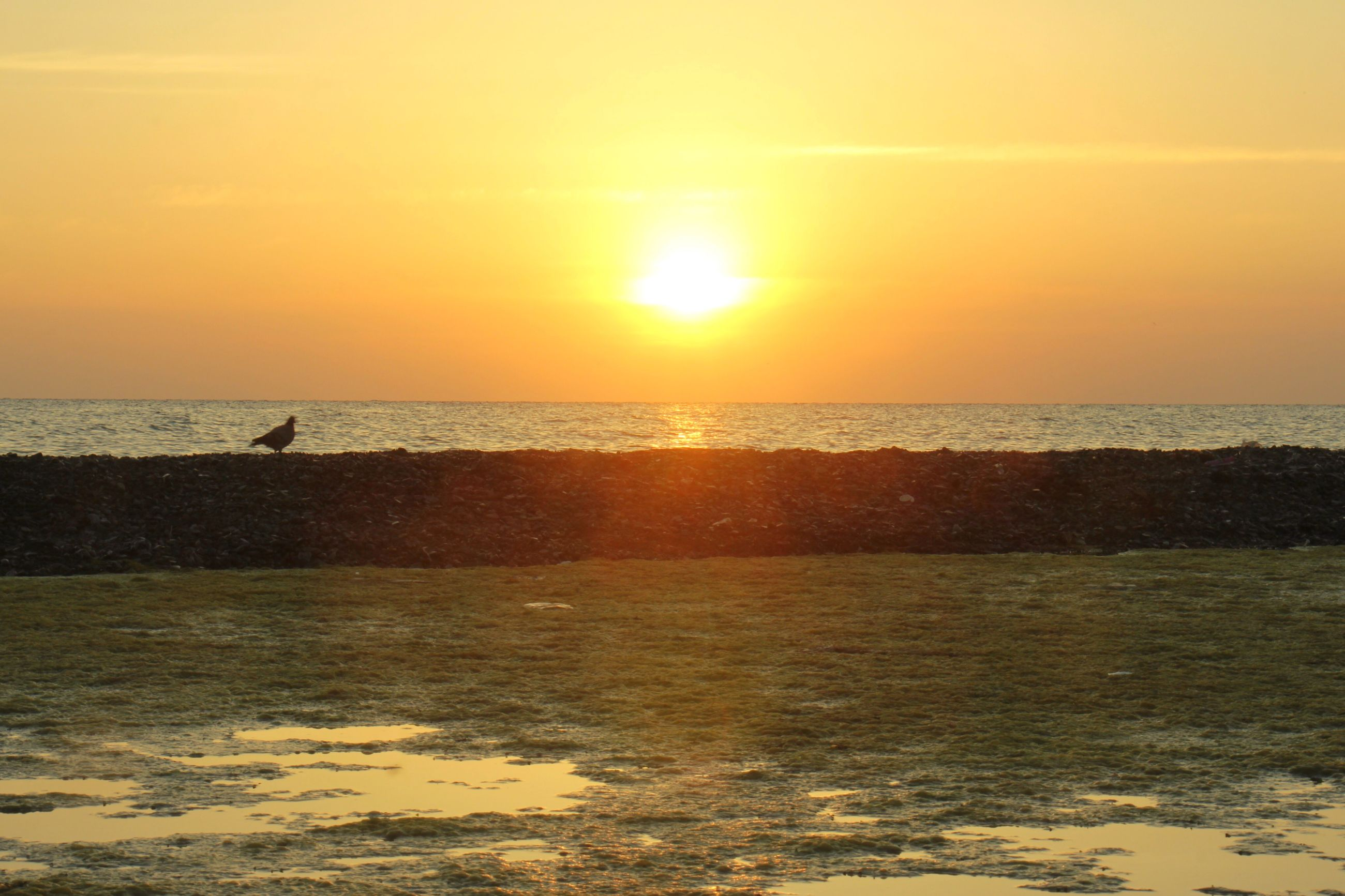 sea, sunset, horizon over water, water, scenics, sun, beauty in nature, nature, beach, tranquility, silhouette, sky, orange color, tranquil scene, idyllic, sunlight, reflection, outdoors, no people, vacations, day