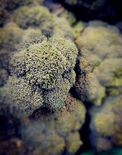 Broccoli como un fondo marino Comidas Ilusión óptica Close-up No People Day Nature Outdoors