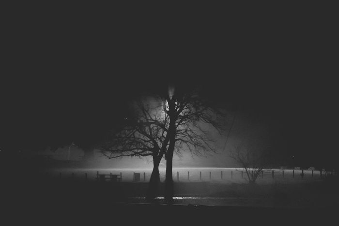 Sillhouette Shadow Shadow Sony EyeEm Selects Bare Tree Tree Trunk Outdoors Lone Branch Fog Nature Scenics