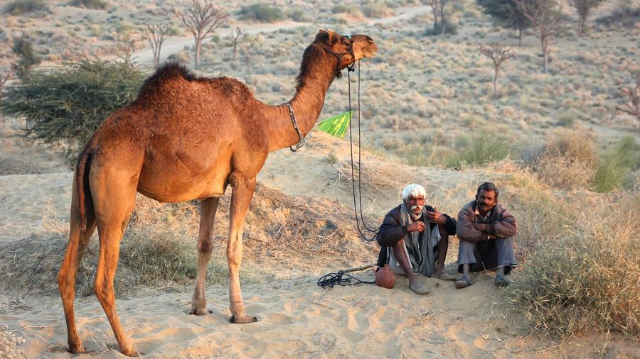 People in a desert