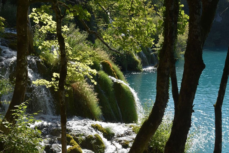 Plitvice Lake National Park Plitvice Lakes National Park Plitvicer Seen Plitvicka Jezera Plitvicka Jezera Nacionalni Park Beauty In Nature Day Forest Growth Motion Nature No People Outdoors Plitvice Plitvice Lakes Plitvice National Park Plitvicelake Plitvickajezera River Scenics Tranquil Scene Tranquility Tree Water Waterfall