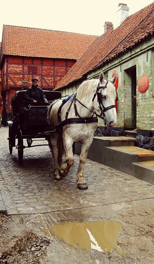 Charming horse and carriage at The Old Town, Aarhus, Denmark ❤ Aarhus, Denmark The Old Town The Old Town århus The Old Town Art Old Town Old Town Streets Horse Horsedrawn Horse Cart Domestic Animals Working Animal Street Building Exterior Transportation Built Structure Mammal Architecture Carriage Outdoors City Road Men Day Water One Person