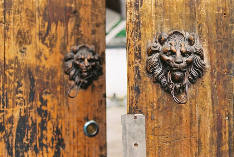 Close-up of old-fashioned lion door knocker