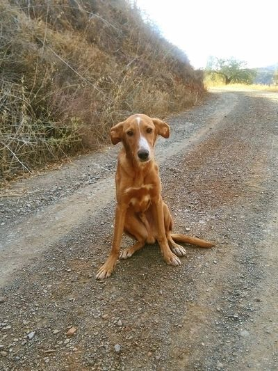Think Rosie has come back as a dog. Dobby Dobby The Dog Dobby Is A Free Elf Stray Dog Brown Dog Doglover Looking At Camera