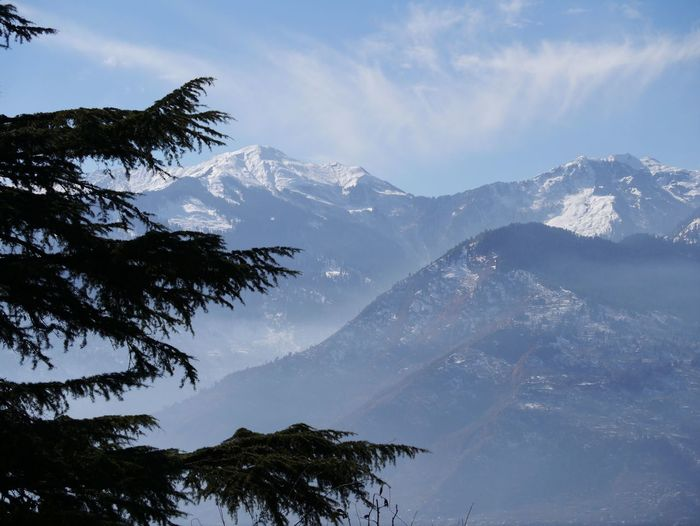 Nature Photography Himalayan Range Himalayan Road Pine Tree
