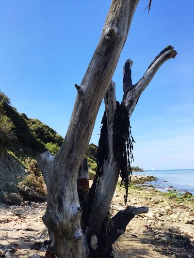 Driftwood on tree trunk by sea against clear sky