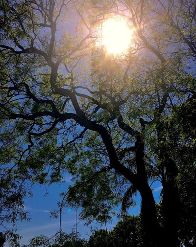 Sun Sun Rays Sunbeam Tree Tree Branches Treescape Low Angle View Nature Beauty In Nature Sun Sunlight Day Tranquility Branch Outdoors Scenics No People Growth Sky