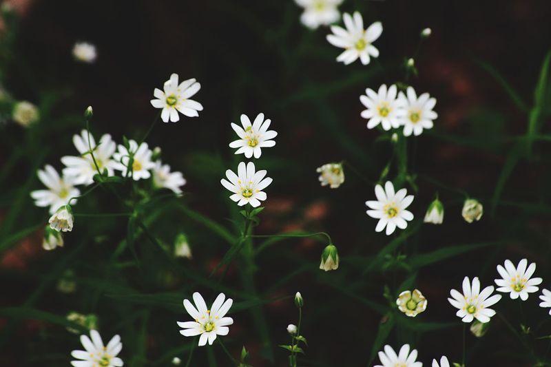 Nature_perfectio