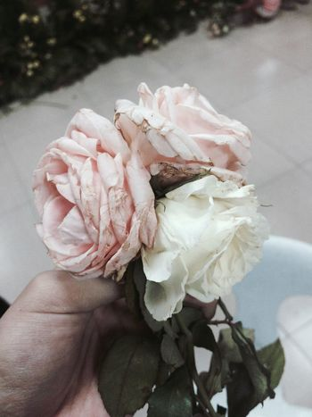 EyeEm Selects Flower Head No People Close-up Beauty In Nature One Person Rose - Flower Fragility