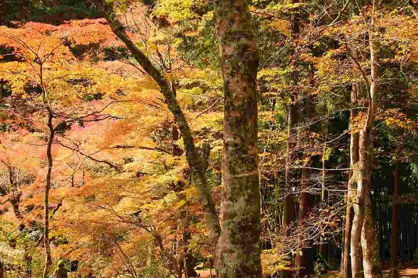 Autumn Beauty In Nature Forest Nature No People Tree