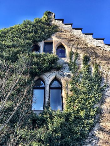 Architecture Building Exterior Low Angle View No People Outdoors Day Sky Medieval Castle Wall Window Greenery