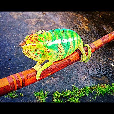 L'endormi , expert du camouflage 😊🌳🍃🍂 Endormi Reunion Island Iphone6plus Colorful Nature Followme Camouflage