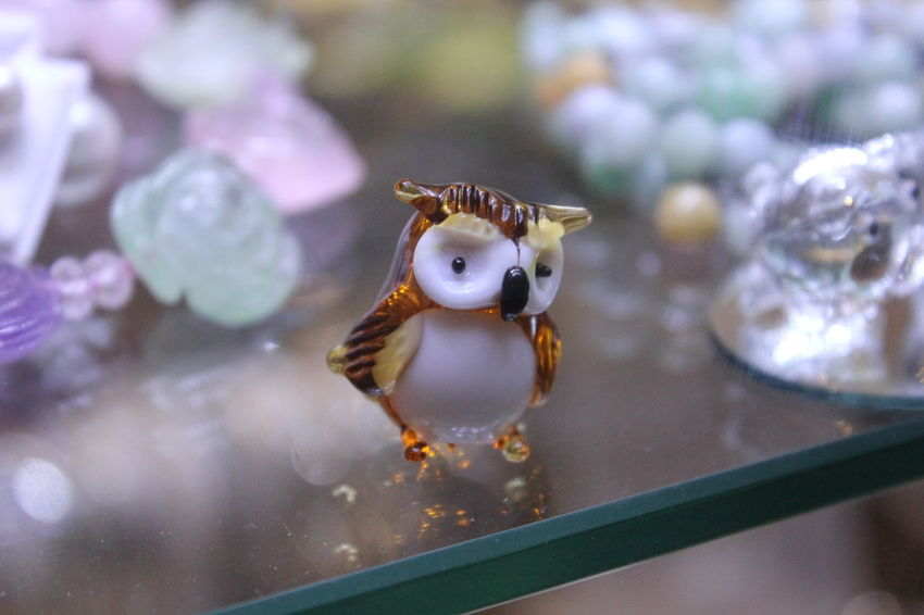 Animal Brown Close-up Colored Glass Come At Me Bro Cute Detail Fierce Fight Glass Gold Jewellery Jewelry Looking At Camera Love Animals Owl Owl Art Owls Personal Personal Perspective Serious Seriousface Small Store Window White