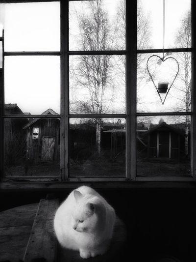 ᴍᴀʏ ᴛʜɪs ᴅᴀʏ ʙʀɪɴɢ ʏᴏᴜ ᴘᴇᴀᴄᴇ, ᴛʀᴀɴǫᴜɪʟɪᴛʏ ᴀɴᴅ ʜᴀʀᴍᴏɴʏ. Window Animal Themes Mammal Architecture Tadaa Community Fortheloveofblackandwhite Cat