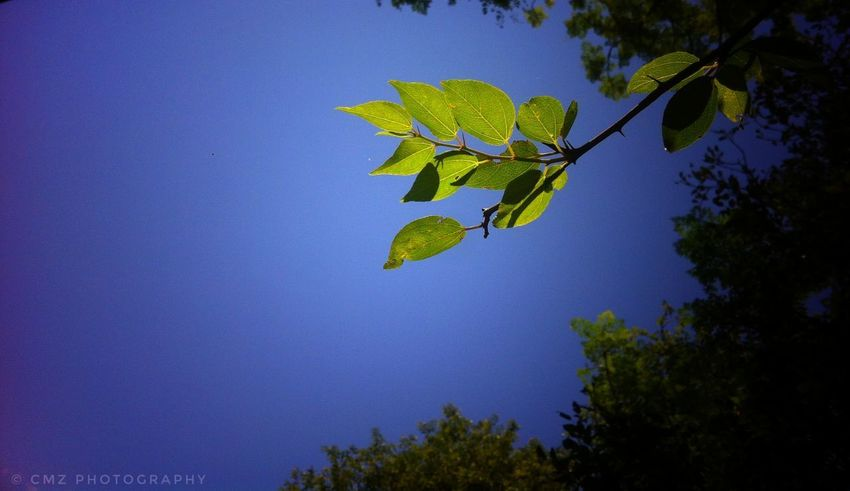 Blue Tree Leaf Nature No People Growth Sky Outdoors Branch Day Beauty In Nature Close-up