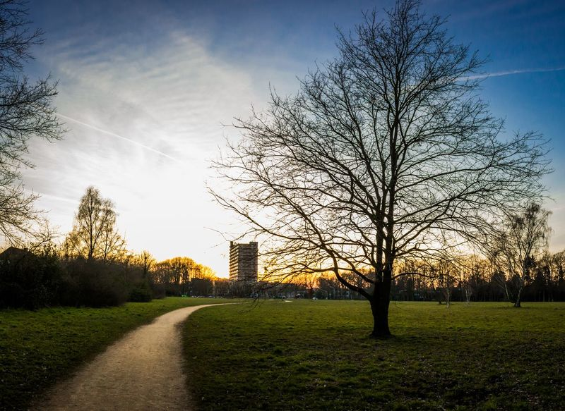 Photo Landscape Landscape_photography Photography Sunset Photographer New Potogrpher Canon Canonphotography Trees Tree Blue Sky
