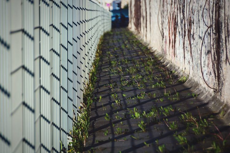 Plants growing on pathway by railing during sunny day