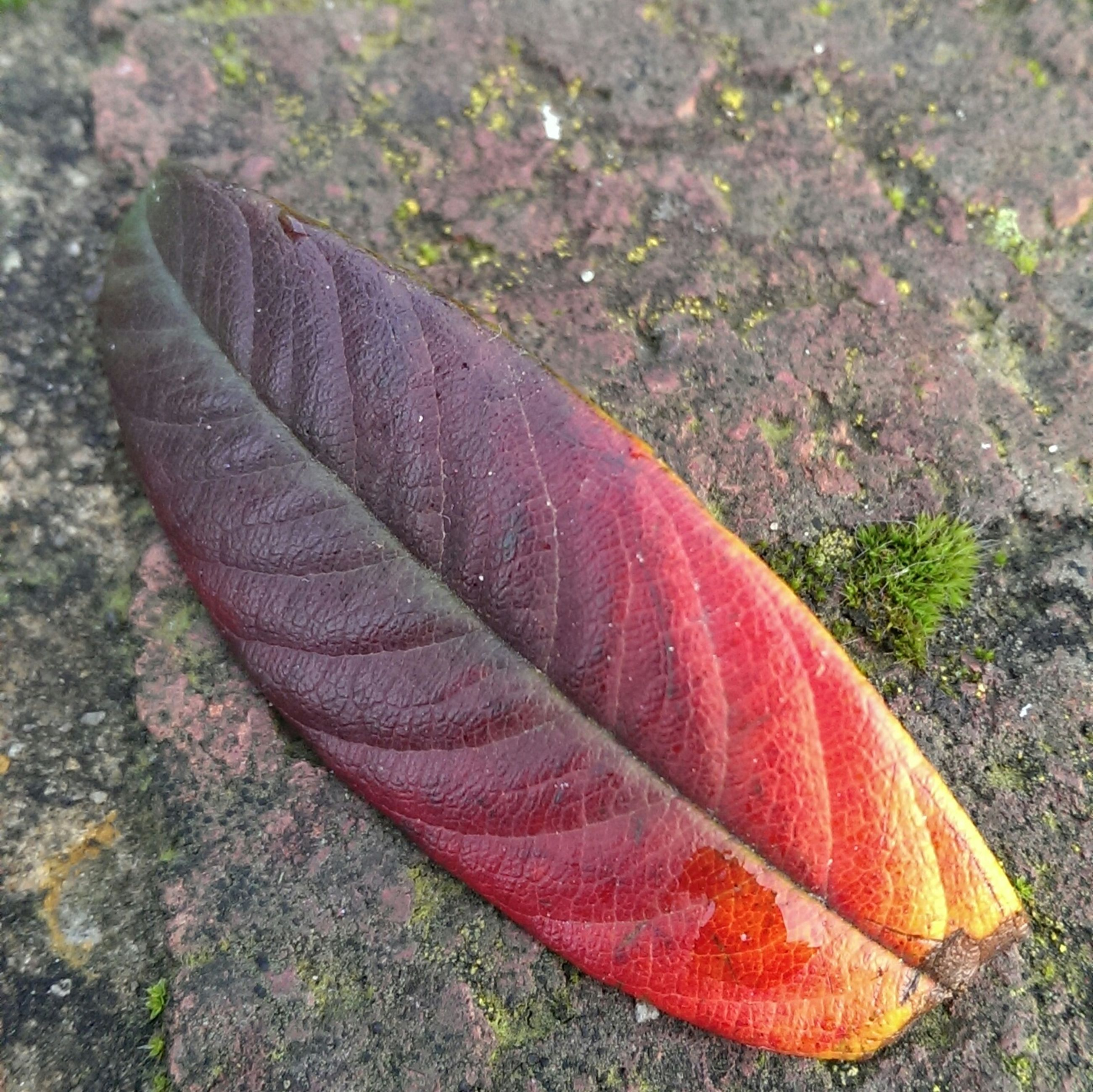 high angle view, close-up, nature, leaf, field, red, autumn, day, growth, fragility, outdoors, ground, change, beauty in nature, no people, fallen, plant, grass, textured, season