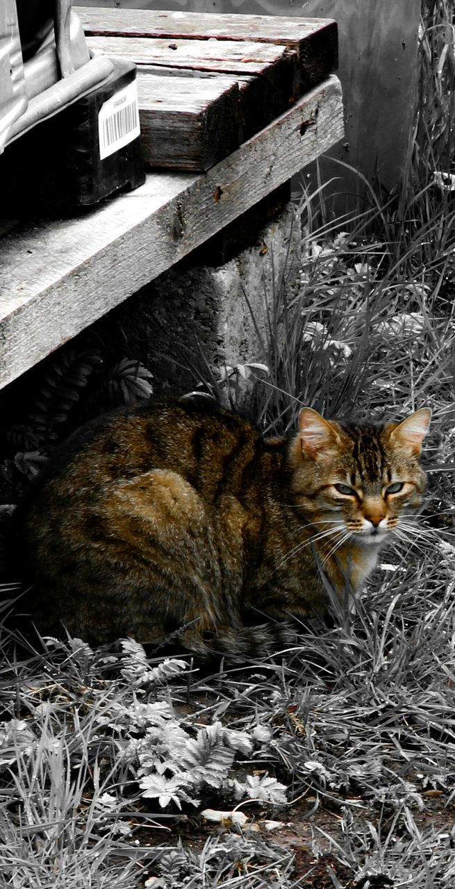 animal themes, one animal, domestic cat, domestic animals, pets, mammal, no people, feline, outdoors, day