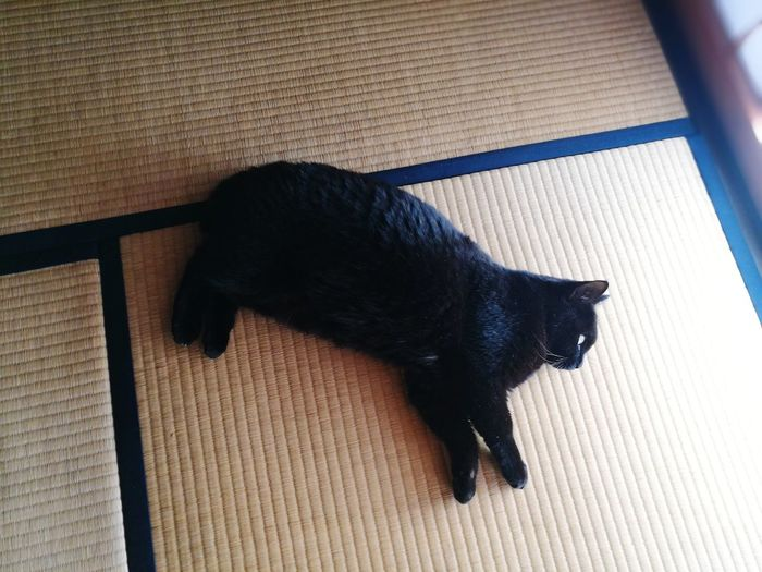 Black Cat Lying Down Tatami Shouji Japanese Old Traditional House Cute Lovely Cat Lover Sun Light Cat Cat Lovers One Animal Animal Themes Domestic Animals Pets Domestic Cat Mammal High Angle View No People Indoors  Black Color Shadow Day