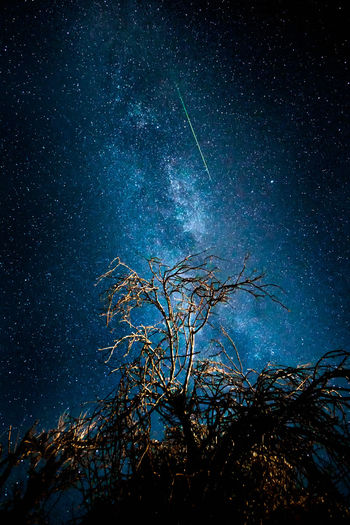 Astronomy Bare Tree Beauty In Nature Blue Branch Galaxy Growth Low Angle View Milky Way Nature Night No People Outdoors Scenics Sky Space Star - Space Starry Tranquil Scene Tranquility Tree