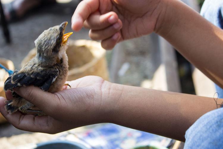 Birding Feeding Animals Bird Bird Market Black Mark Feeding  Human Finger Human Hand Illegal Selling One Animal Young Bird