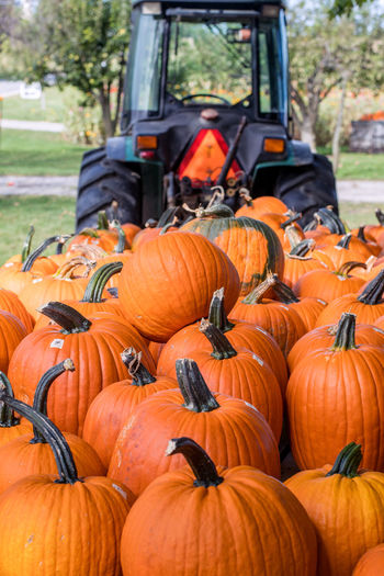 farm tractor pulls in a large wagon filled with fresh pumpkins for fall cooking and decorating