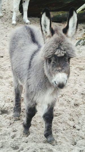 Willem Dierenpark Amersfoort Donkey Ezel