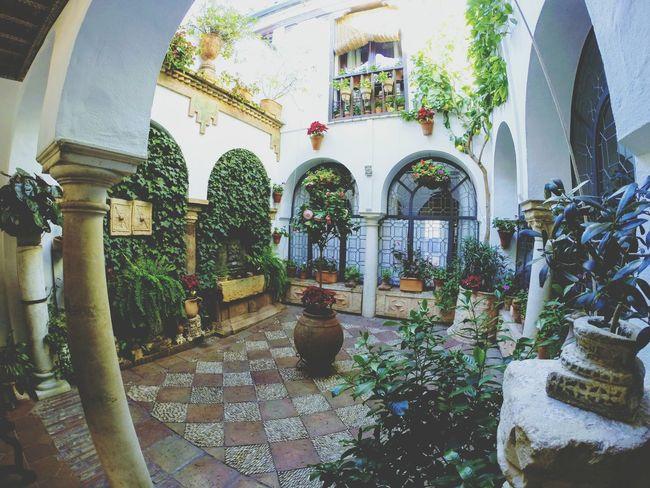 Patios de Cordoba Córdoba SPAIN Patios De Córdoba Flowers Entrance Decoration Travel Religion Architecture No People Day Water Outdoors