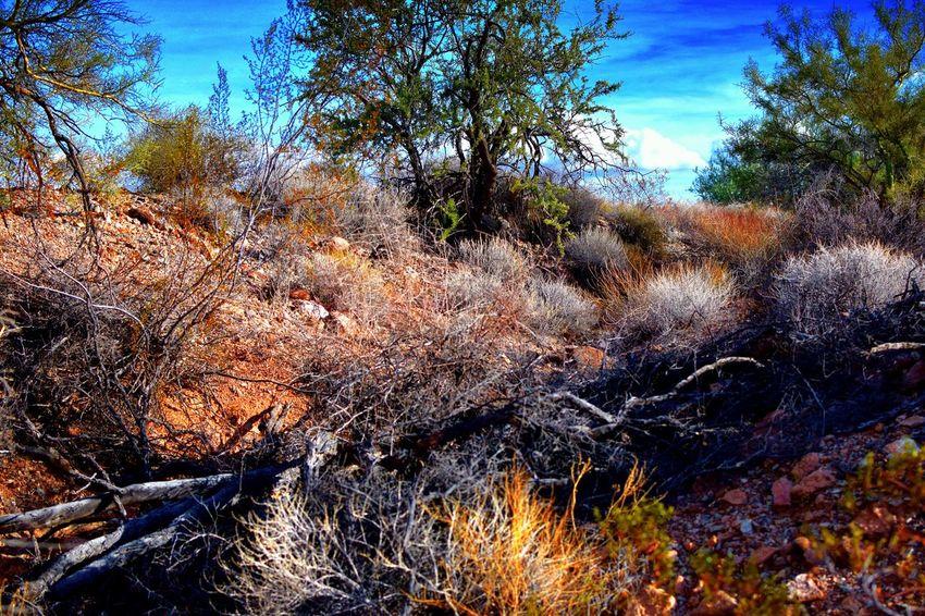 Arizona West Desert Beauty Desert Colors Desert Landscape Growth Nature Unusual Desert