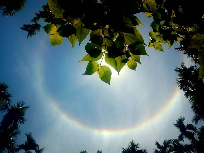 Sun Halo Tree Leaf Forest Nature Spirituality Tranquil Scene Palm Tree Scenics Outdoors Sky Sunlight Beauty In Nature No People Landscape Day Beauty Branch Colours Of India India Like4like Green Color Indianphotography EyeEm Team Likeforlike Perspectives On Nature
