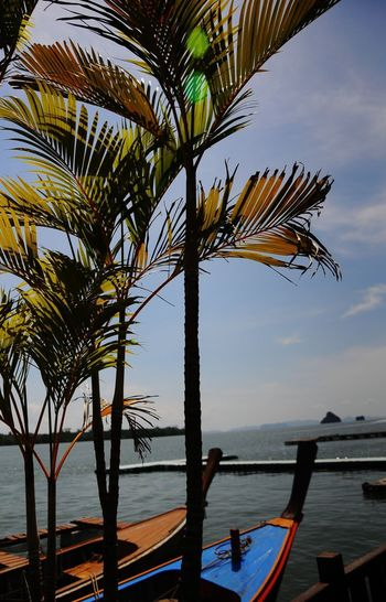 Water Tree Sea Sky Nature Beauty In Nature Tranquility Outdoors Palm Tree