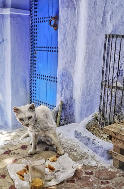 Built Structure No People Day Cat Chefchaouen Chefchaouen Medina Bluecity Morocco Blue Door Animal Coffee Coffee Time Travel Travel Destinations Street Landmark Cake Food Eat