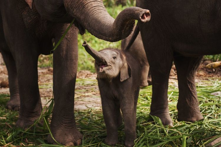 Elephants and calf standing on land in forest