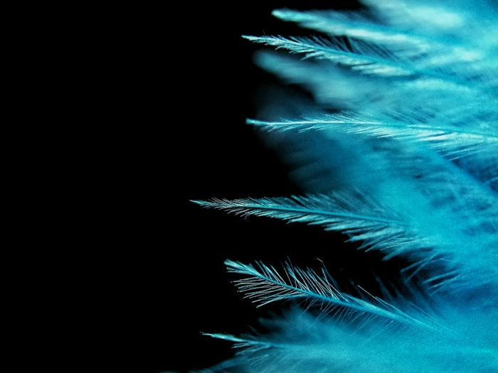 Phone Photography With Clip-on Macro Lens Phone Macro Samsung Galaxy S4 Phone Blue On Black Feather_perfection Featherlisious Phone Samsung Blue Feather Macro_perfection PhonePhotography Macro Beauty Macro Photography 50 Shades Of Blue Feather Collection Things I Like