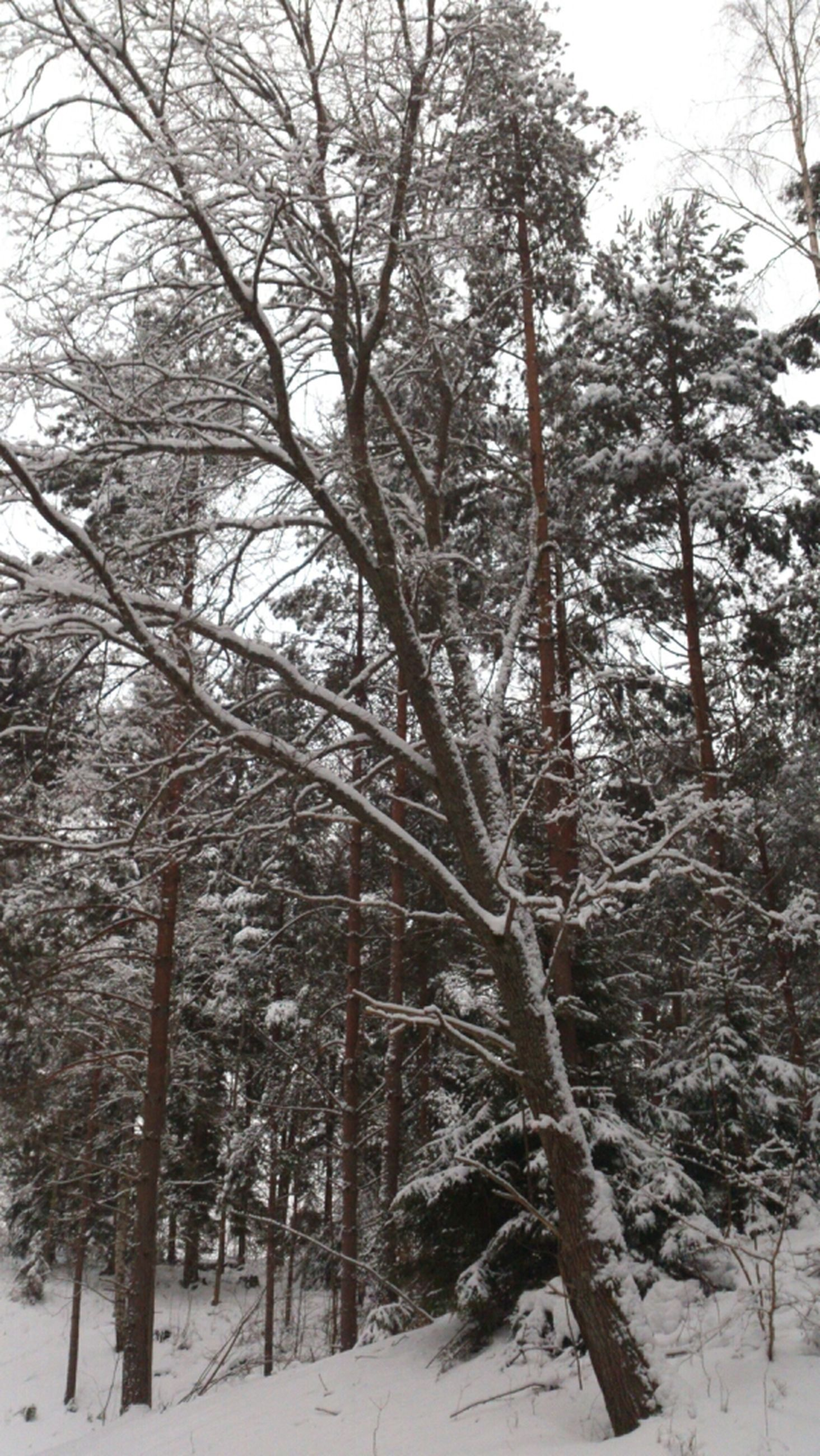 snow, winter, cold temperature, tree, season, weather, covering, bare tree, tranquility, tranquil scene, nature, frozen, beauty in nature, branch, white color, scenics, forest, landscape, covered, non-urban scene