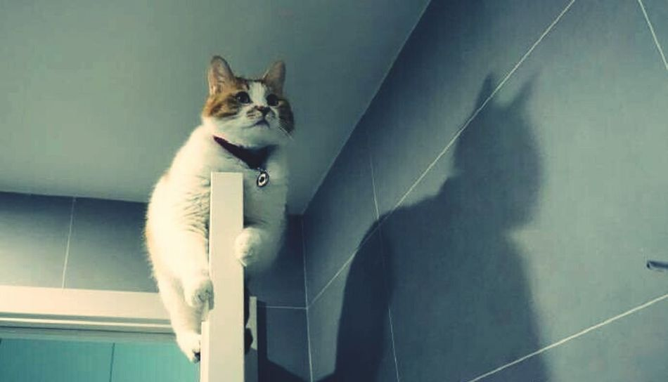 Spidrer Man😁😁😁😁 China Cat Cat♡ My Hometown Hi! Enjoying Life Animals Cute Clever Bathroom L Love It Taking Photos Home Sweet Home Whst Is It? EyeEm Best Shots - Black + White Relax