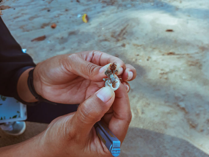 High angle view of hands holding hermit crab