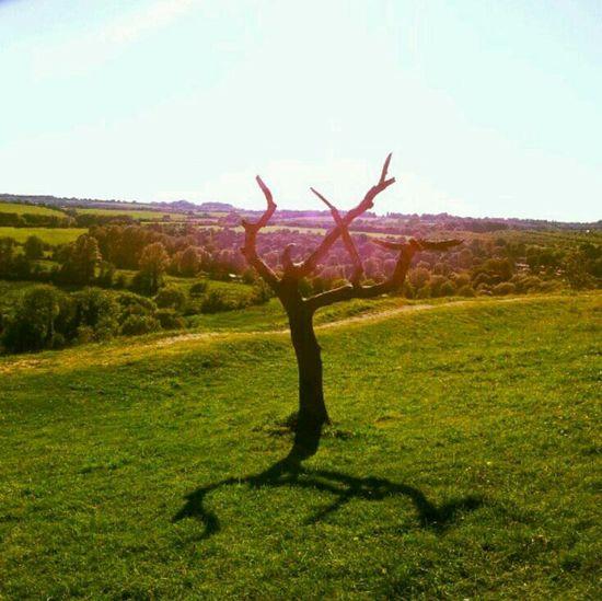 Landscape Exploring Trees