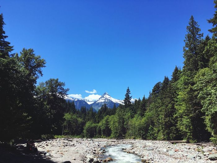 Mountain Beautiful BC Stream Snow Mountains British Columbia Tree Plant Sky Nature Growth Blue Copy Space Beauty In Nature Clear Sky Forest Tranquil Scene Sunlight Scenics - Nature Day Tranquility Green Color Non-urban Scene Outdoors Land No People