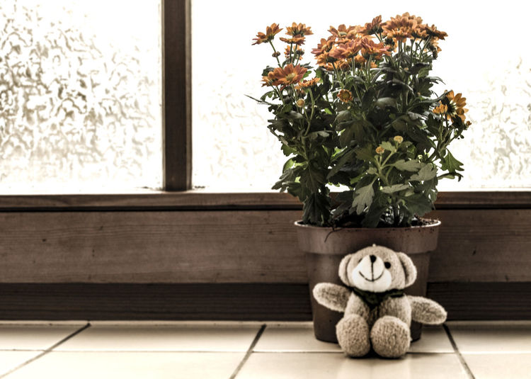 Blumentopf Emotions Fensterbank Flowers Gift No People Present Sepia Teddy Teddybear Window