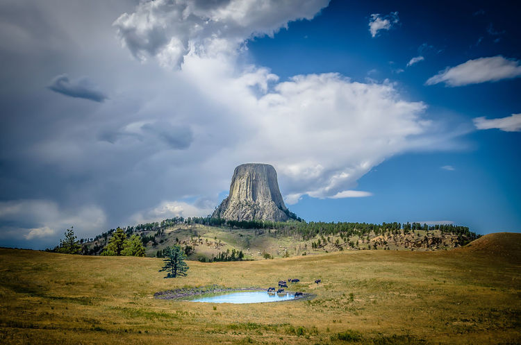 Buffalo herd at a pond with Devil's Tower in the background Beauty In Nature Bison, Buffalo, Blackbirds, Wyoming, Wild, Animal, Horns, Fur, Raw, Cloud - Sky Day Devils Tower Landscape Monument Mountain Nature Nikon No People Outdoors Pond Portrait Scenics Sky Tourism Travel Travel Destinations Vacations Wyoming