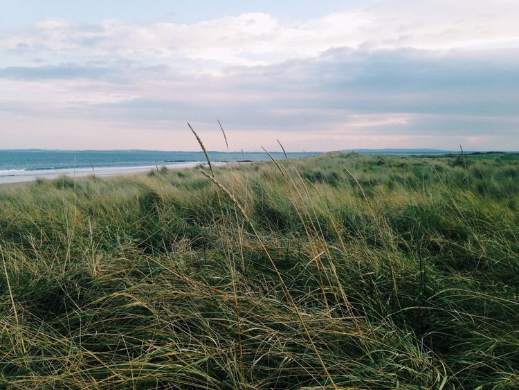 Nature Nature_collection EyeEm Nature Lover Scotland The Grass Is Green Clouds Clouds And Sky Vscocam VSCO